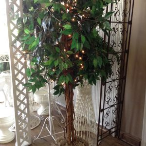 Ficus w Lights