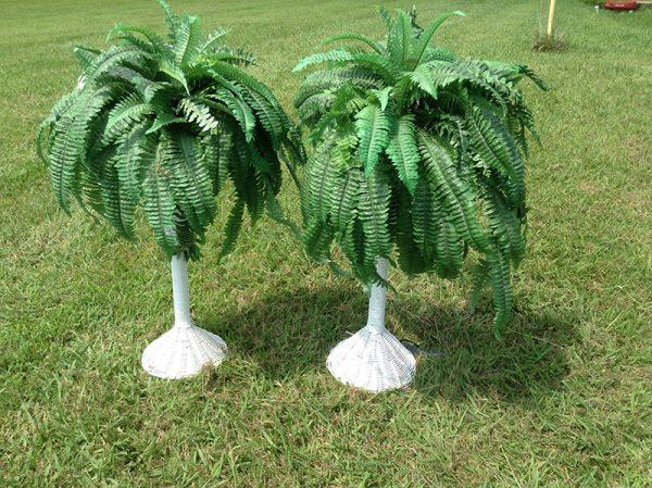 Silk Ferns